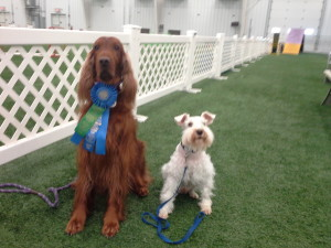 Jada and Milo blue ribbon